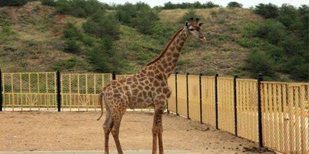 呼和浩特大青山野生动物园-驴妈妈门票预订