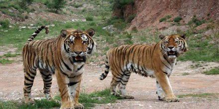 呼和浩特大青山野生动物园