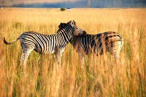 南非、阿联酋7晚10日二国连线游([已降1000元]好望角自然保护区,比邻斯堡野生动物园,太阳城★★★★★)