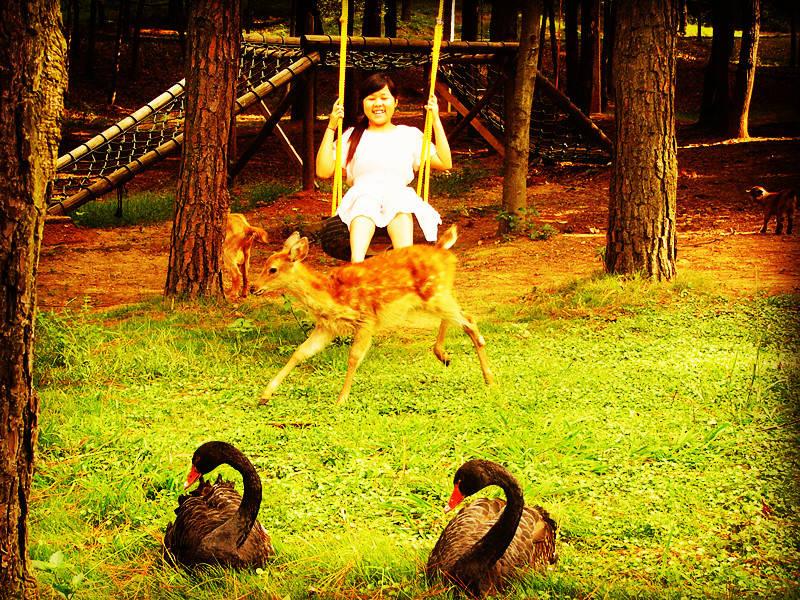 武汉九峰森林动物园-驴妈妈门票预订