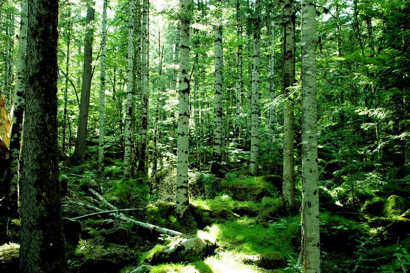 五营国家森林公园门票 伊春五营国家森林公园攻略 地址 介绍 在哪里