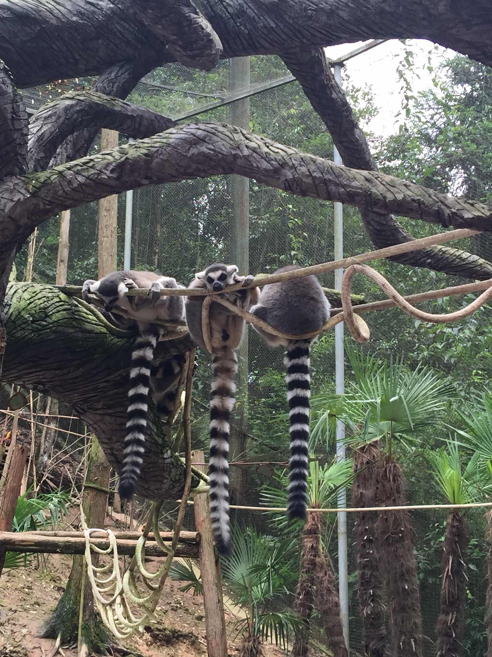 雅安碧峰峡野生动物园   野生动物园(含猛兽区观光车 动物表演)【暑期