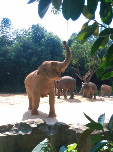 广州长隆野生动物园特定日门票