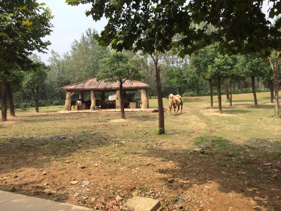 虽然路上小堵,开了四个小时到达目的地。进了动物园感到非常好,动物多。特别坐小火车,可以感受零距离接触野生动物!都是猛兽!还看了马戏团,大象表演,鸟类表演等。玩了一个下午,全部玩遍。公园地方很大,也是散步休闲的好地方。小孩子玩开心,回家路上一直睡觉。