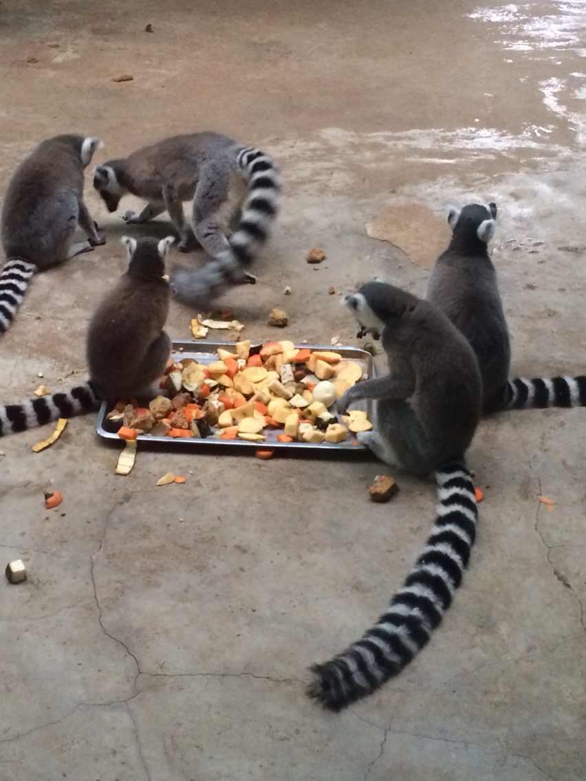 北京野生动物园成人票(含动物表演)点评