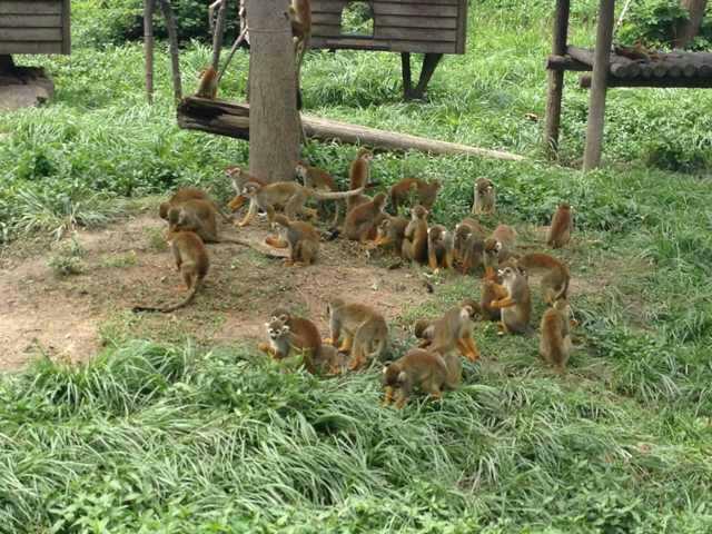 上海野生动物园上海野生动物园动物园里动物很多,就是猛兽区车 驴妈图片