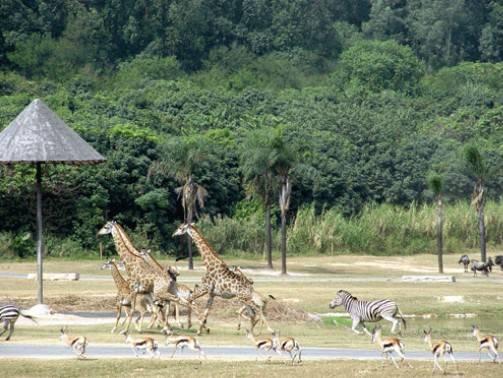 番禺广州长隆度假区游玩攻略-驴攻略v攻略攻略女之路帝妈妈图片