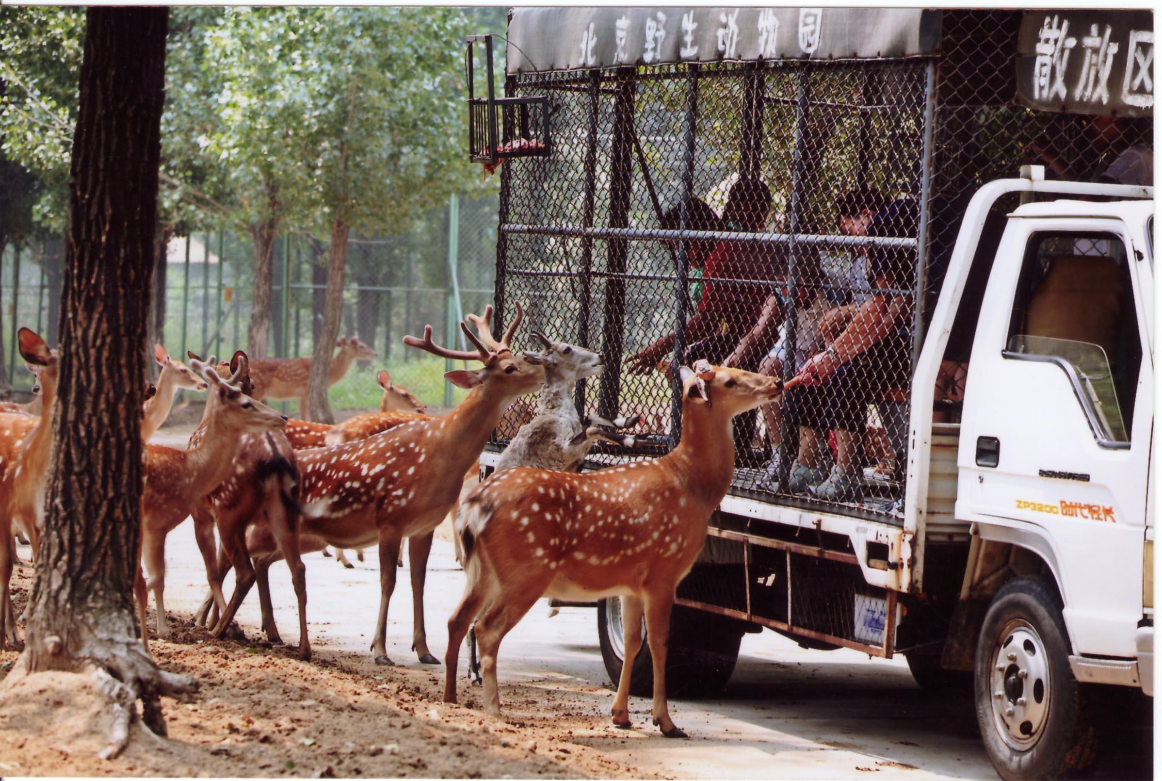 【北京动物园亲子游】北京维景国际会议中心住1晚 大兴野生动物园门票