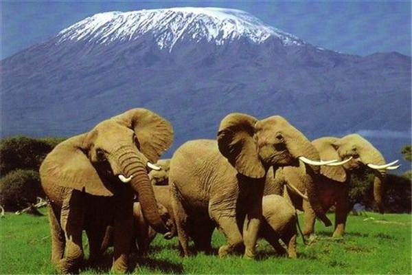 肯尼亚,迪拜8晚10日深度游(动物大迁徙,那库鲁湖,阿联酋奢华之都迪拜)