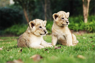 小动物区 @上海野生动物园官网