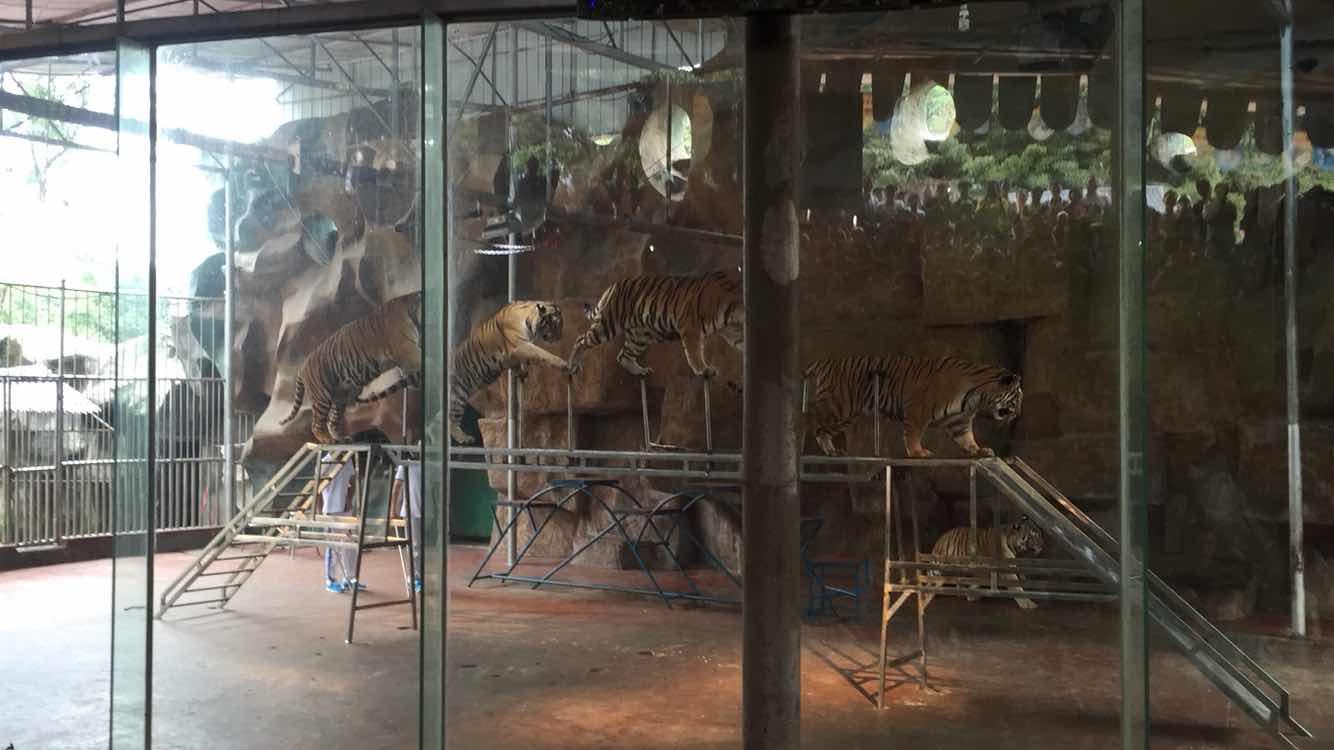 雅安碧峰峡野生动物园   野生动物园(含猛兽区观光车 动物表演)