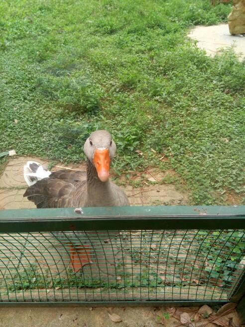 武汉九峰森林动物园   武汉九峰森林动物园 成人票【带着宝宝一起去看
