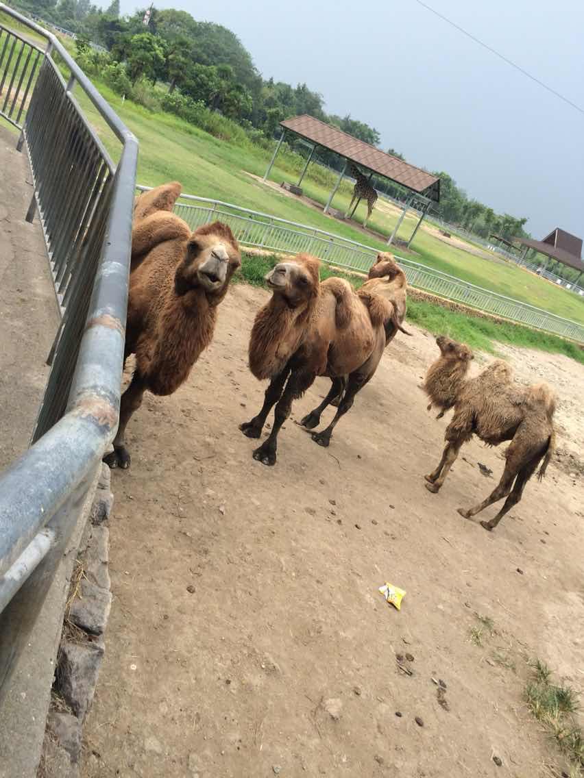 宁波雅戈尔动物园   成人票