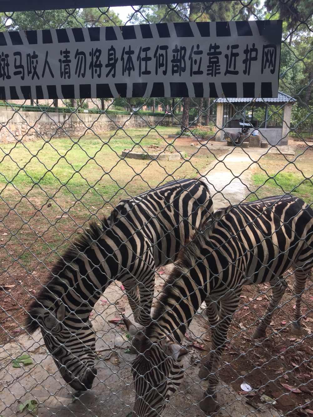 九峰森林动物园   武汉九峰森林动物园 成人票【带着宝宝一起去看精彩