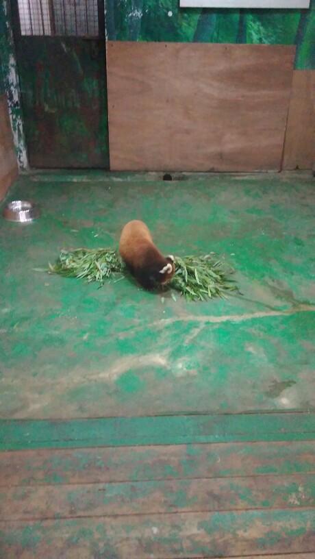 沈阳森林动物园   沈阳森林动物园成人票【电子票】