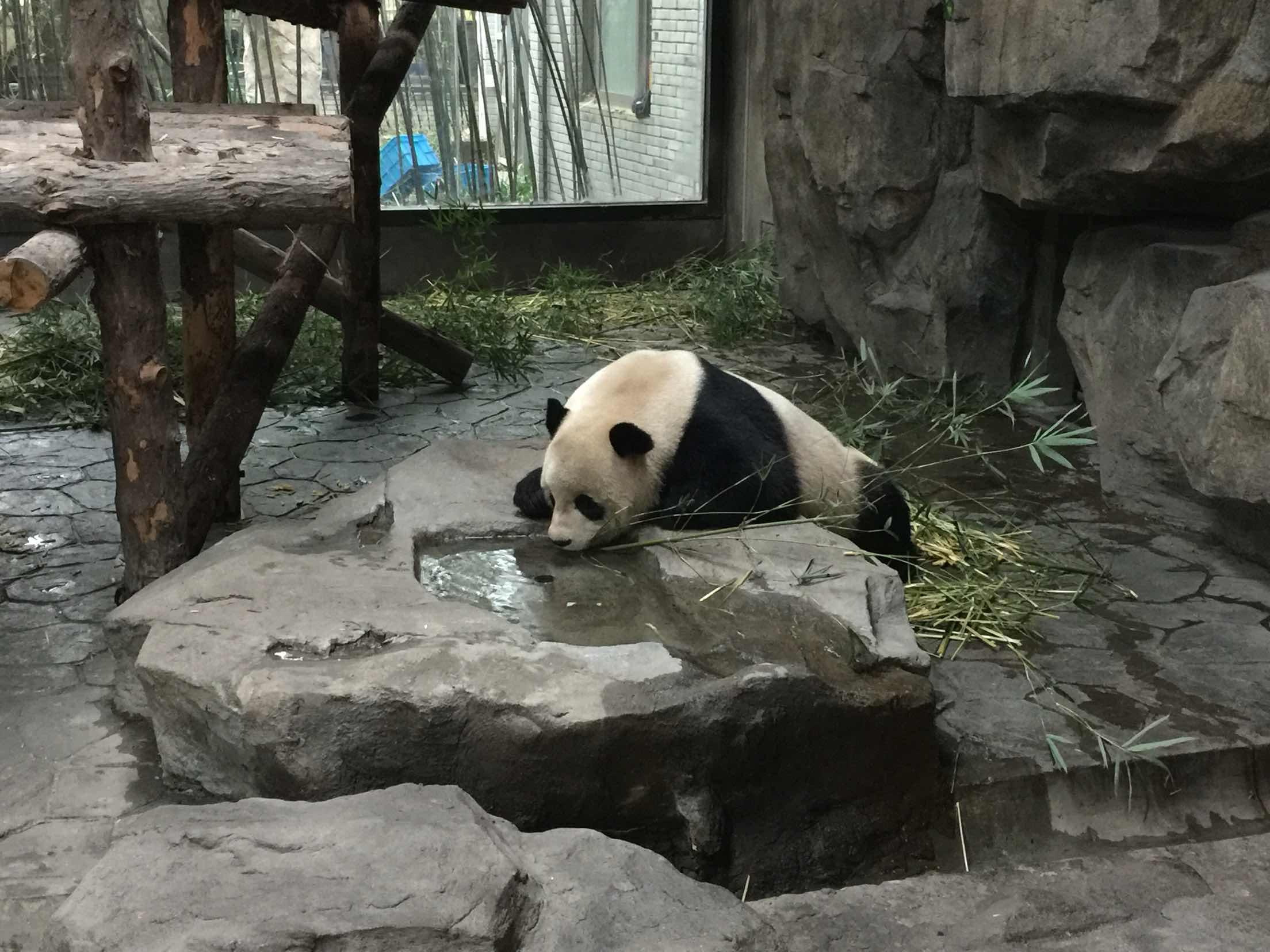 上海野生动物园   成人票