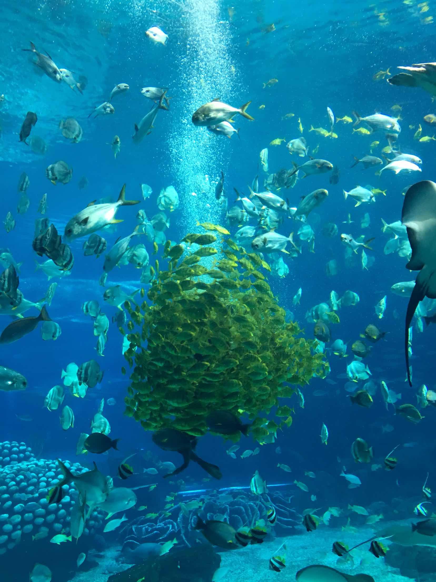 会游动的鱼壁纸_找一些手机桌面在海底来回游动的漂亮的鱼-