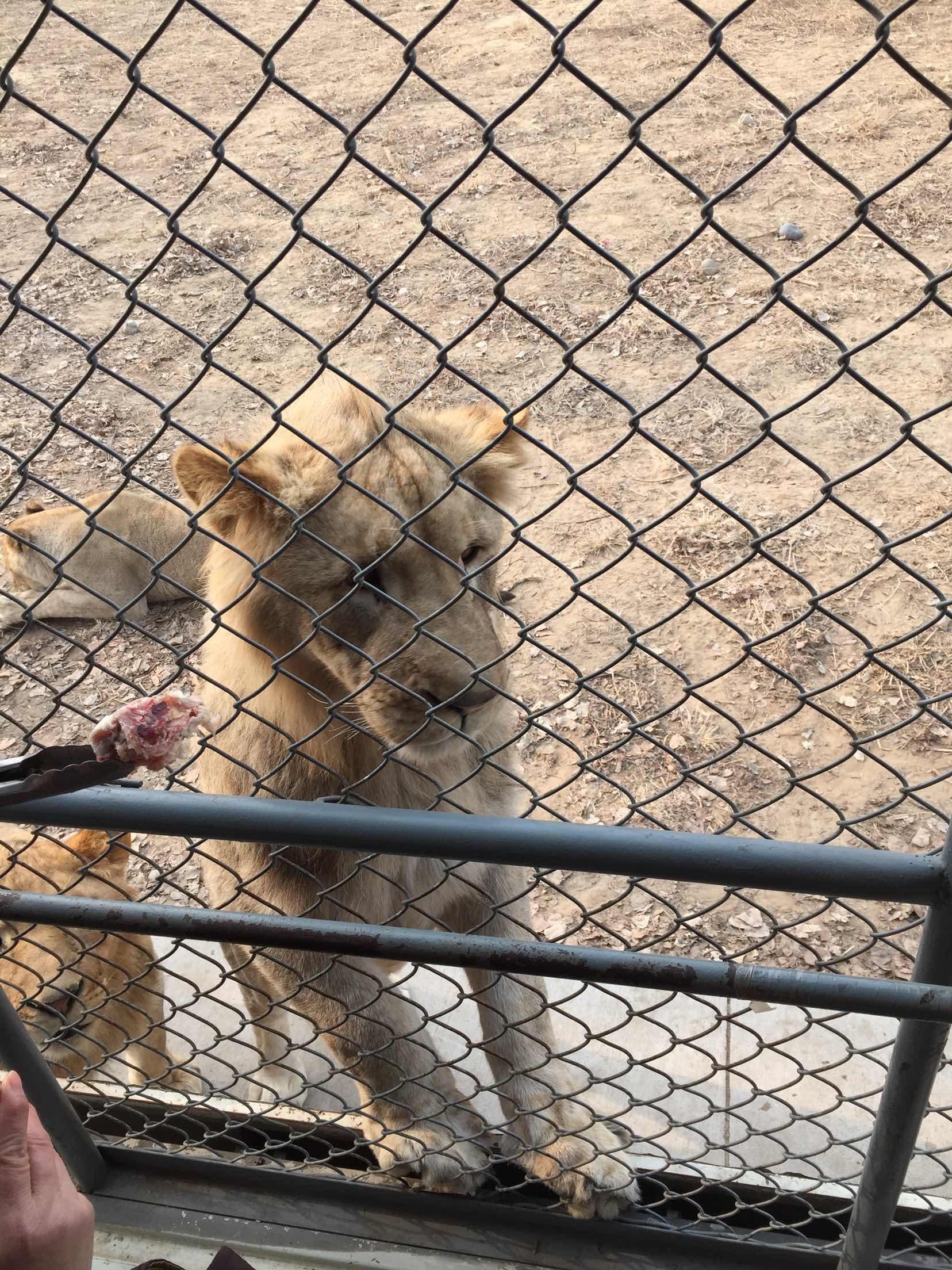 北京野生动物园   成人票【无需预约】