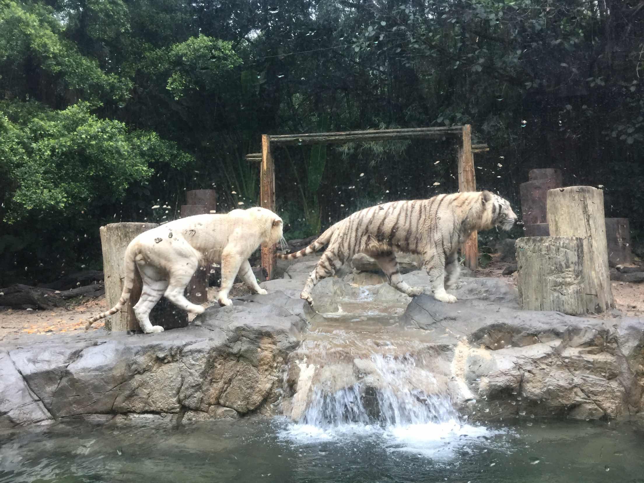 长隆野生动物园_长隆野生动物世界攻略