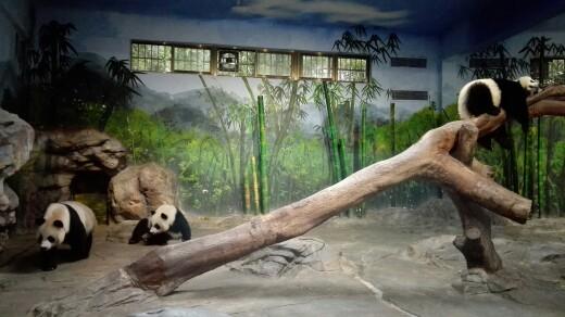 长隆野生动物园+动物世界-平日成人票+动物世界-平日