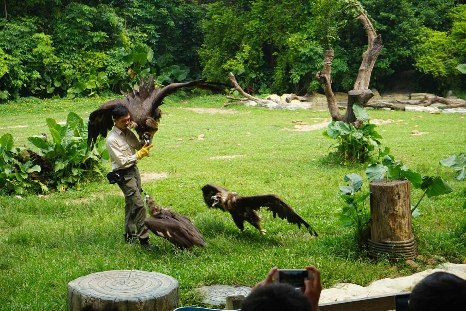长隆野生动物园   动物世界-平日成人票 动物世界-平日儿童票