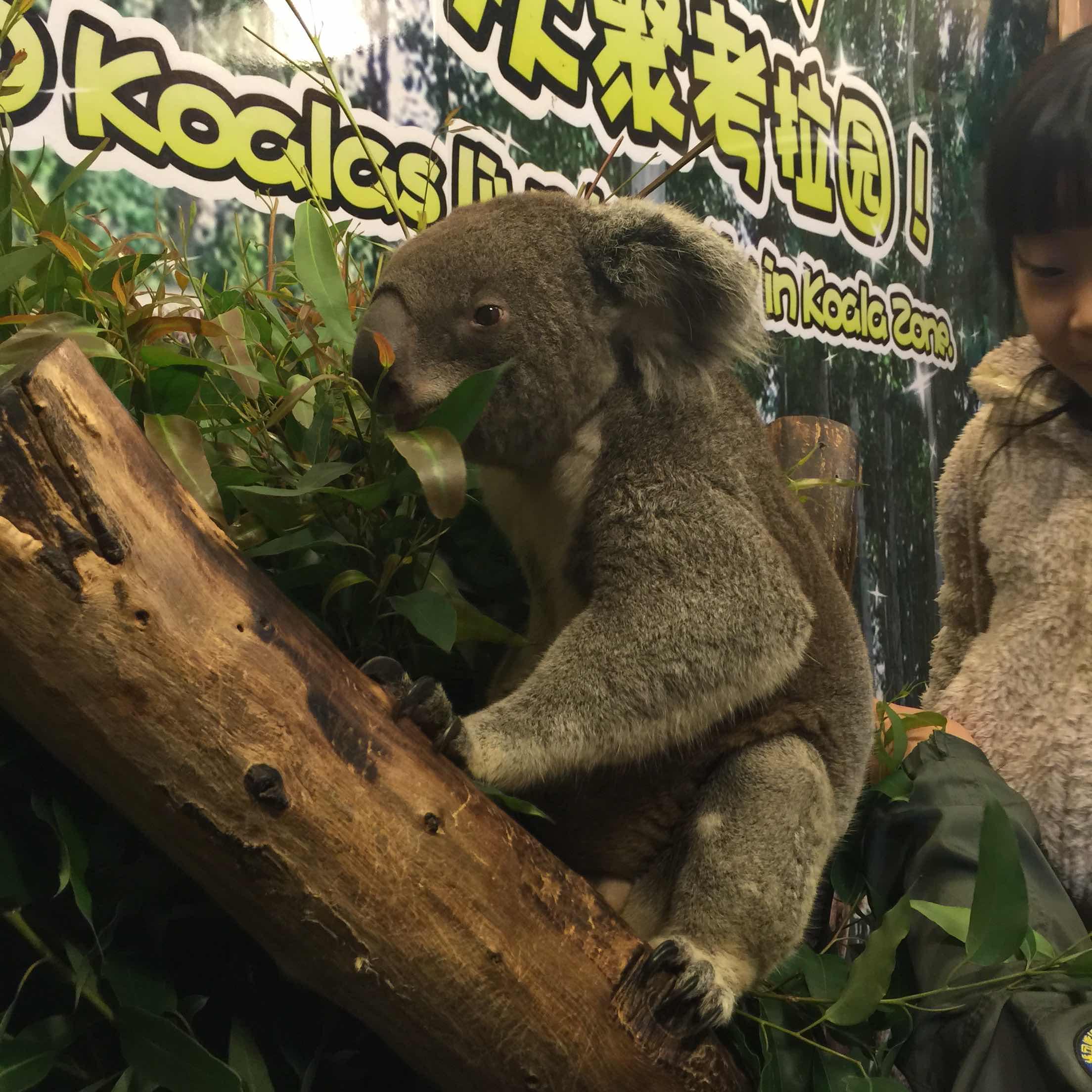 长隆野生动物园   动物世界-平日长者票