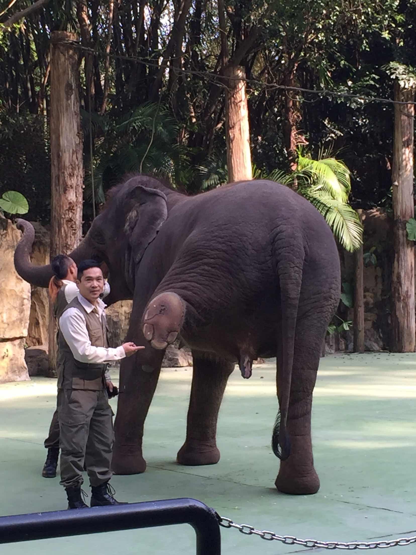 长隆野生动物园   动物世界-平日成人票