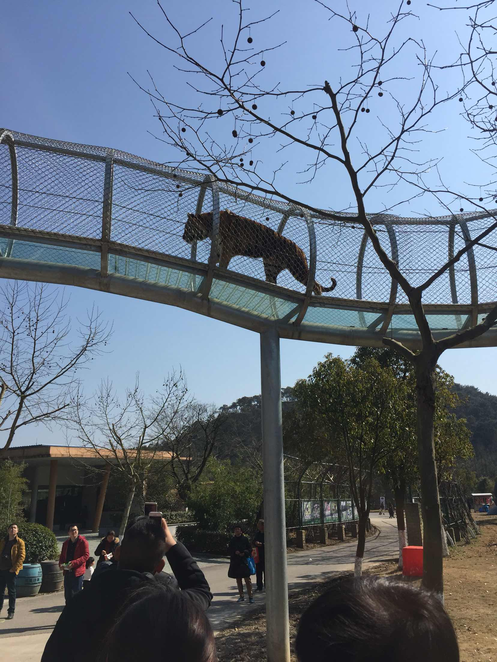 雅戈尔动物园   成人票