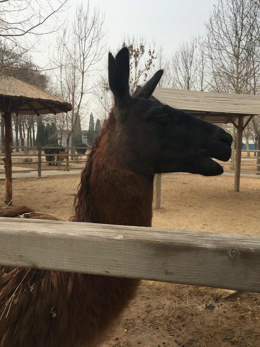 北京野生动物园   成人票【无需预约】 优惠票【学生,老人等特殊群体