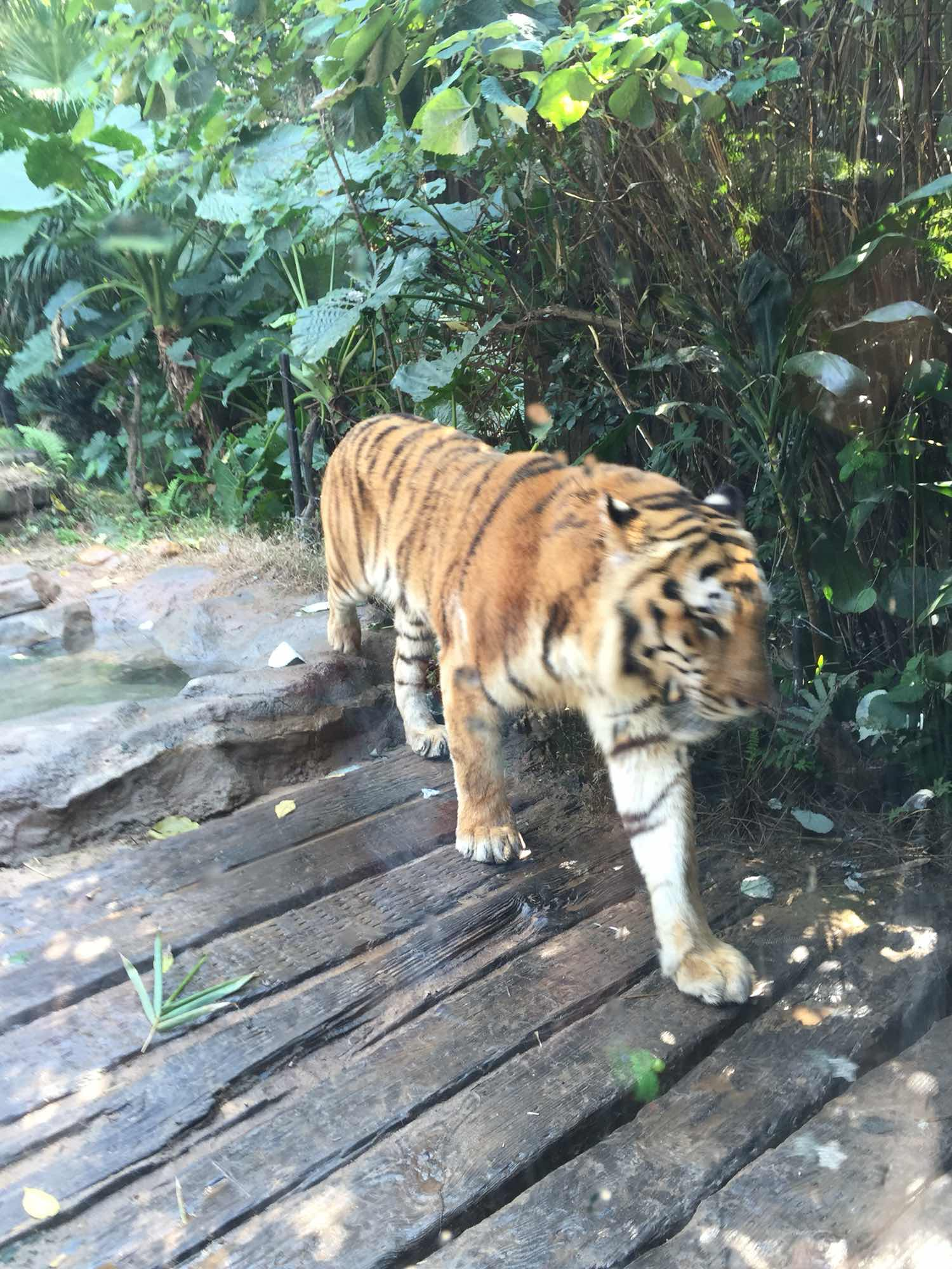 长隆野生动物园   动物世界-节假日成人票【门票特卖】