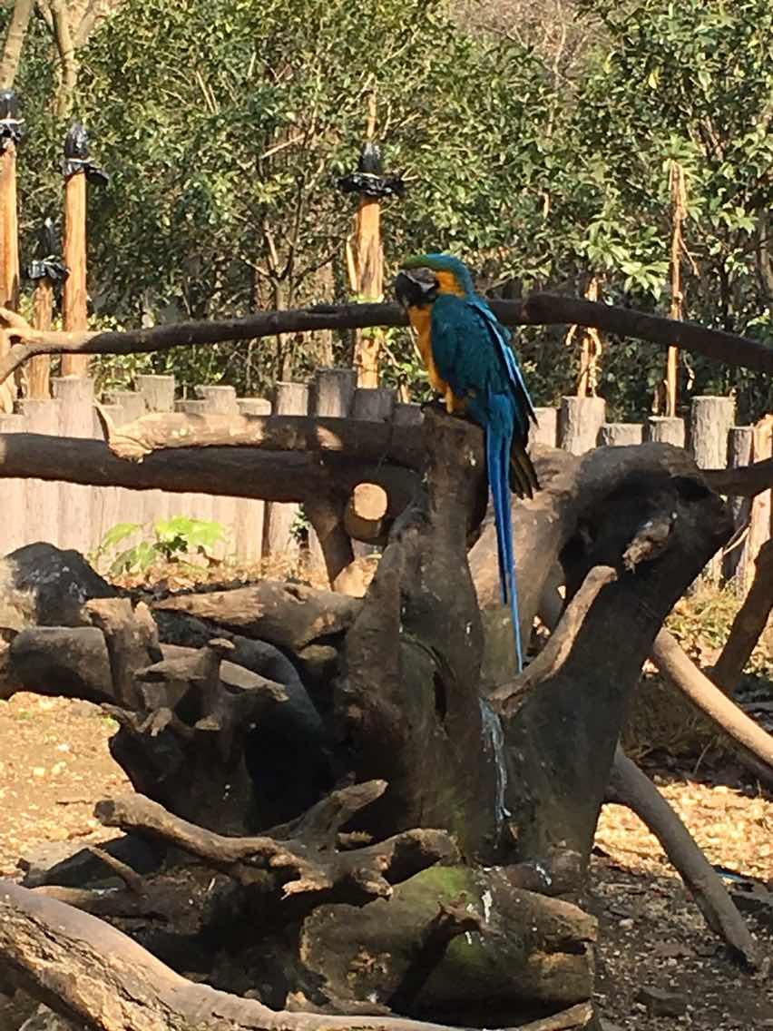 杭州动物园   成人票【刷身份证或二维码入园】