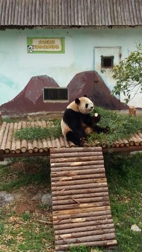 江苏景点门票 无锡景点门票 无锡动物园·太湖欢乐园