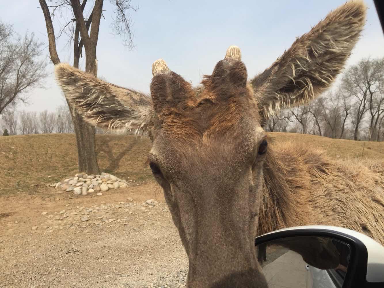 北京野生动物园   自驾区车票1份   门票双人票【出票2小时后生效】