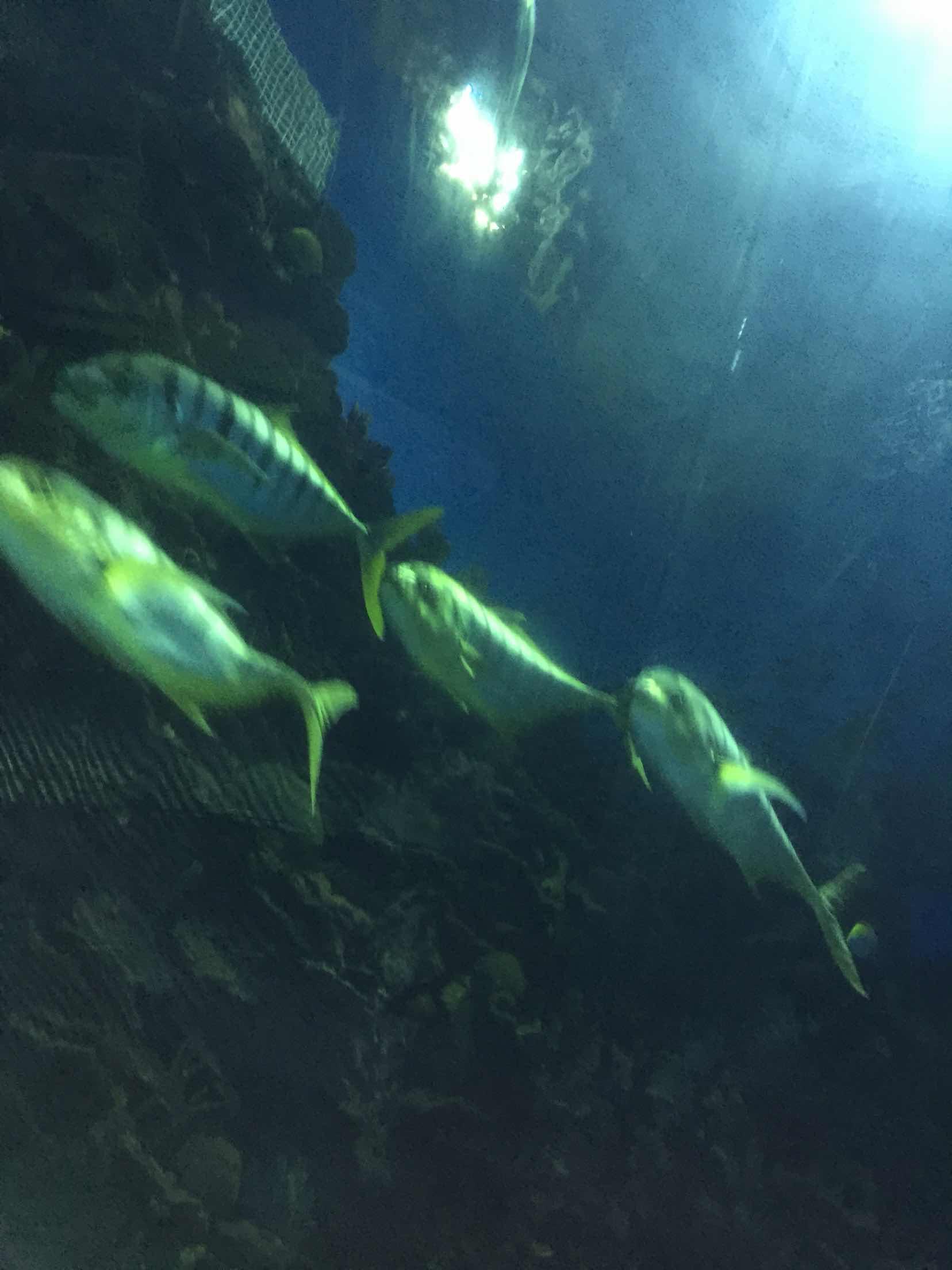 北京海洋馆   日场-成人票含动物园门票【4月1日-10月31日可用】