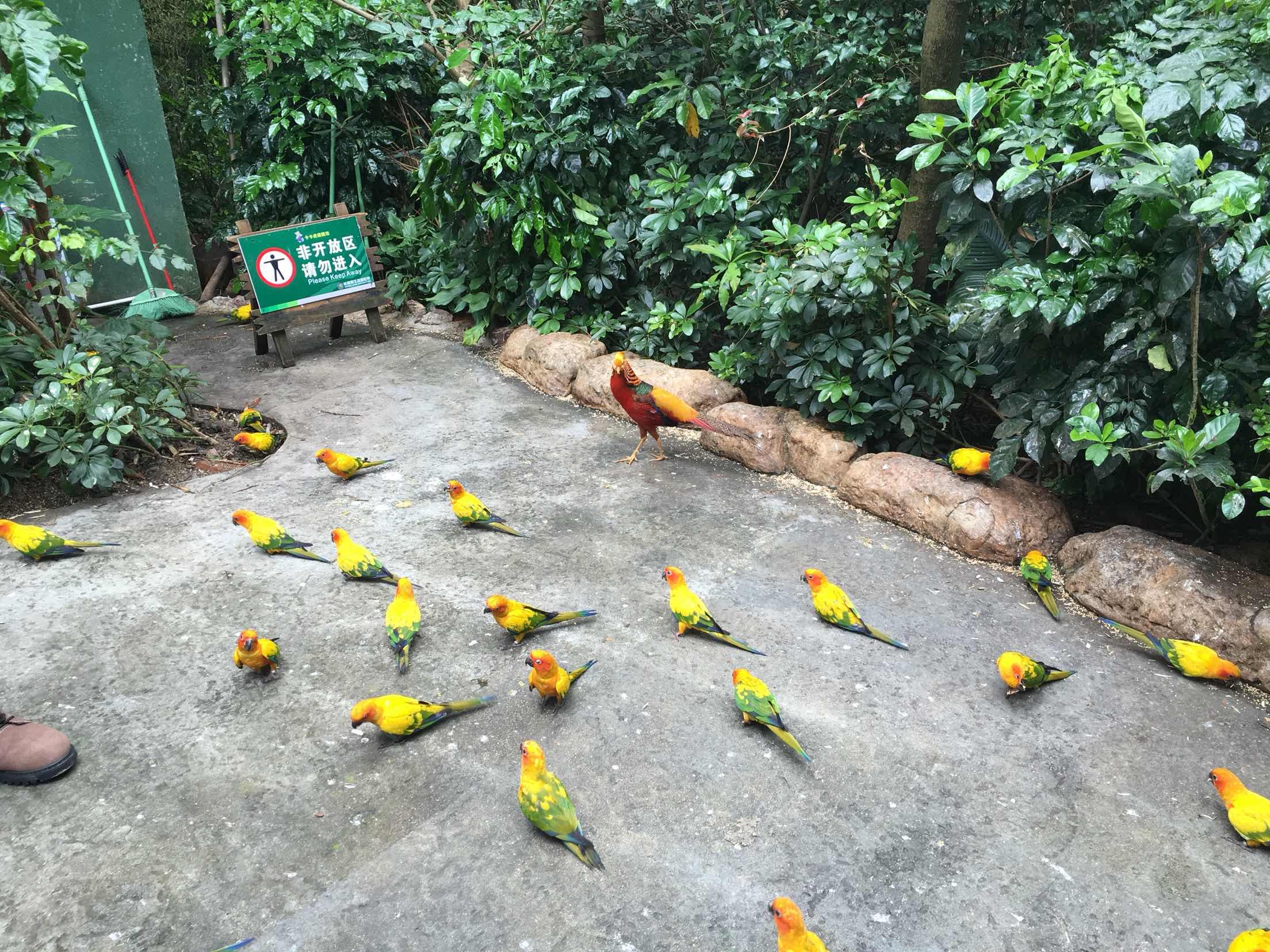长隆野生动物园   动物世界-节假日儿童票