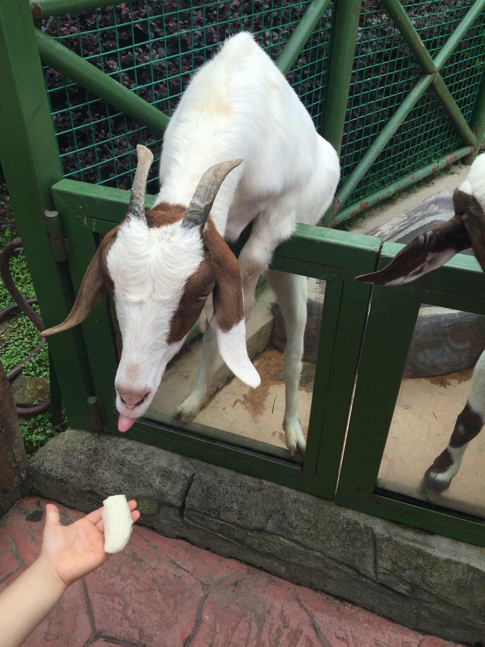 杭州野生动物世界   成人年卡