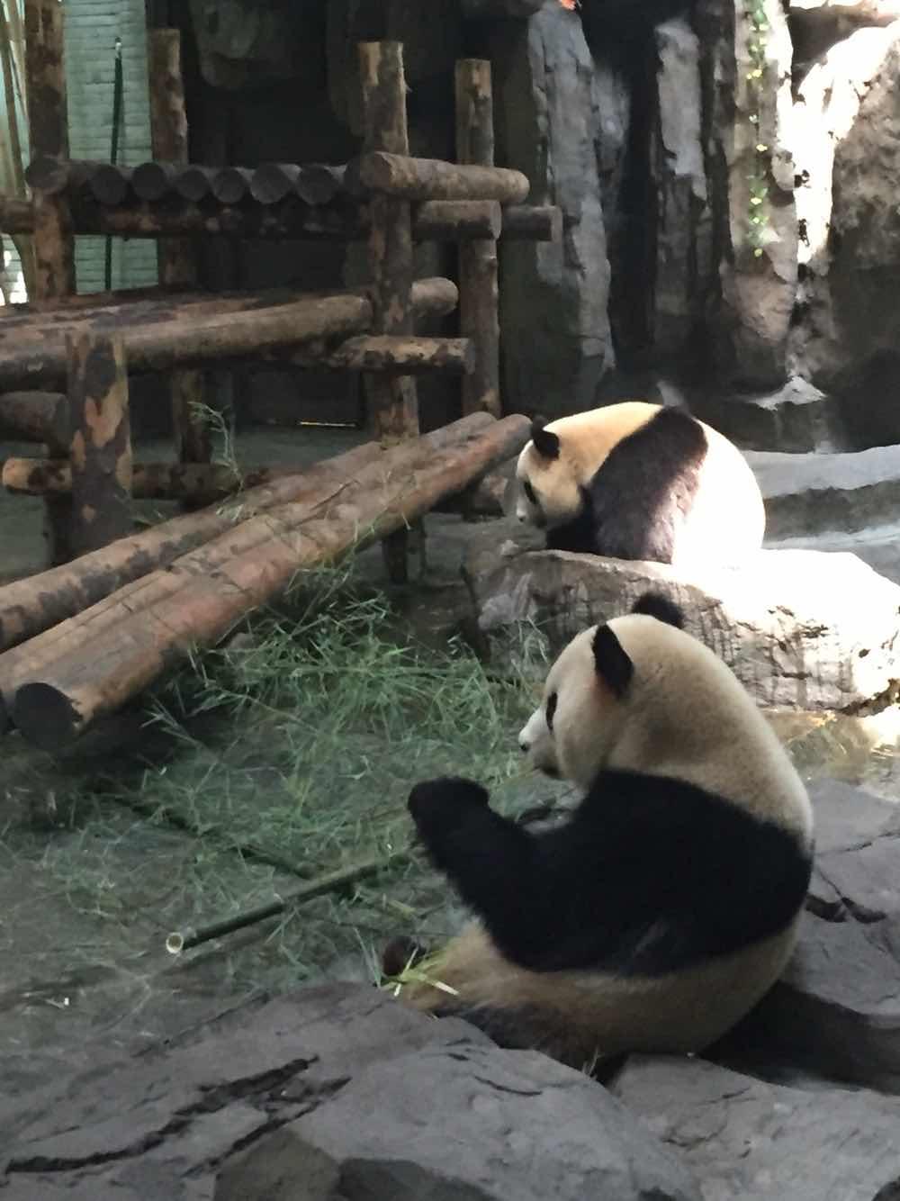 上海野生动物园+学生票上海野生动物园特别好小学足球射门图片