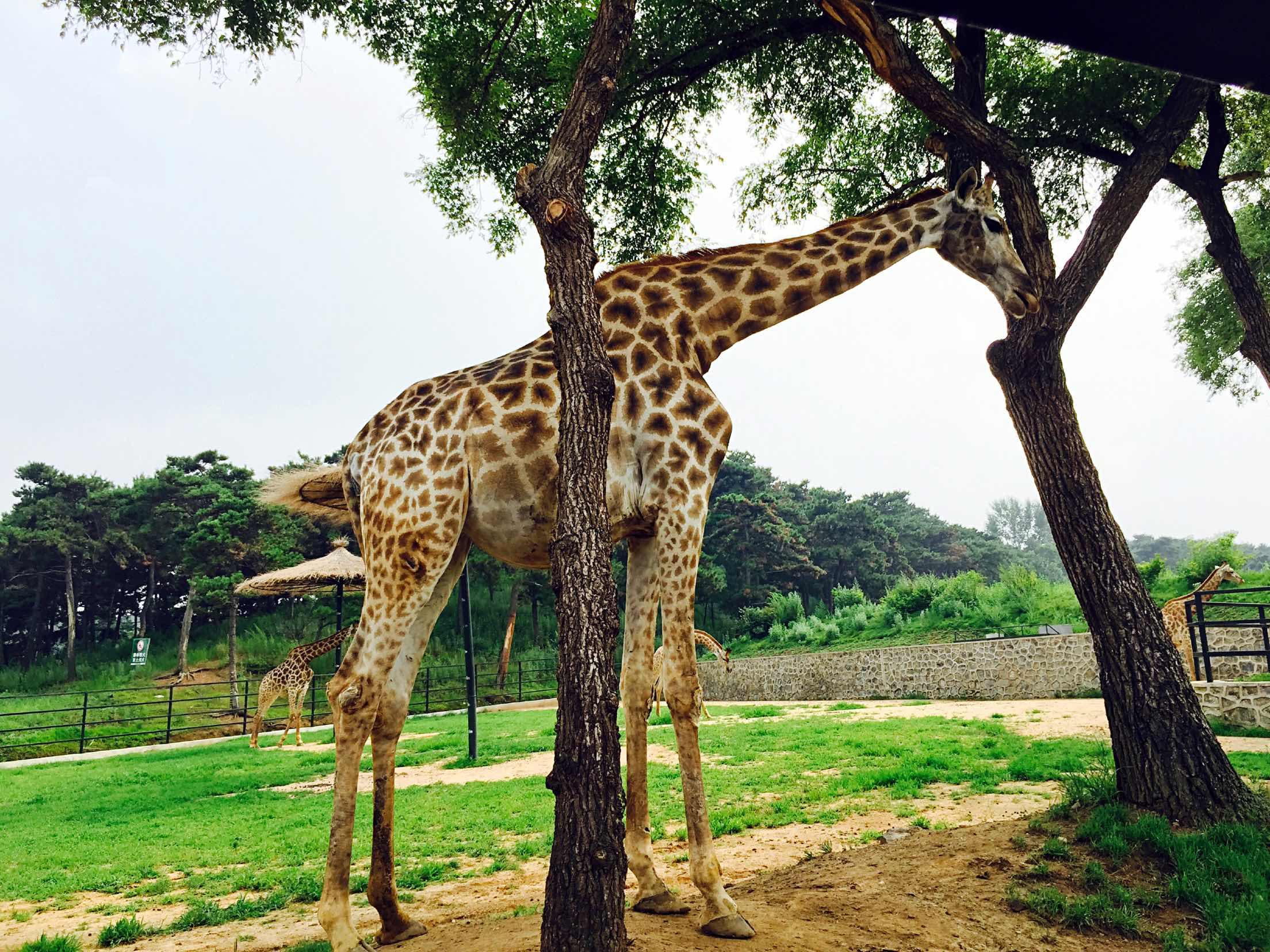 沈阳森林动物园   成人票