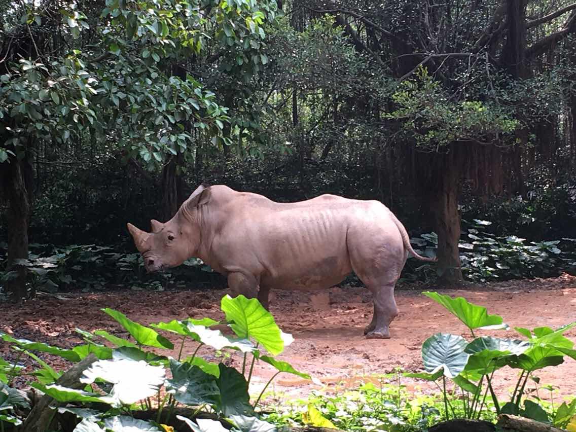 广州长隆野生动物园   动物世界-节假日成人票