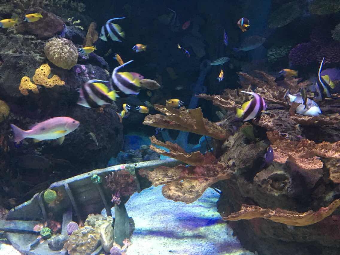 关于上海水族馆和上海长风海洋世界,想问一下这两的区别图片