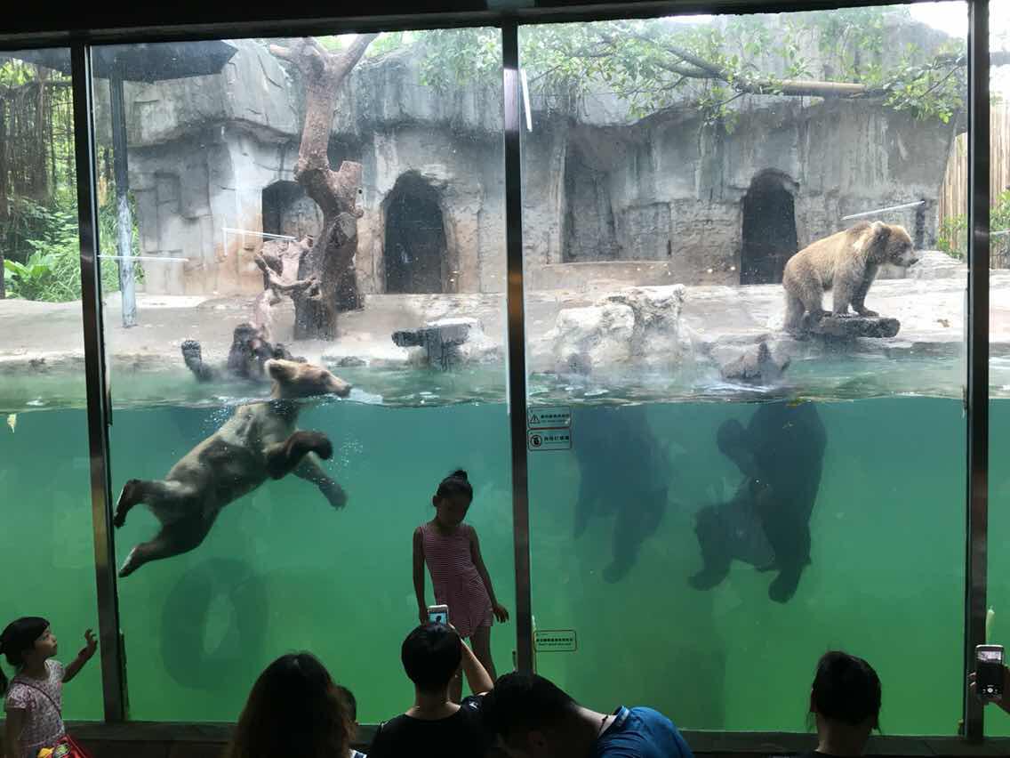 广州长隆水上乐园 长隆动物世界   水上乐园 动物世界-节假日儿童票