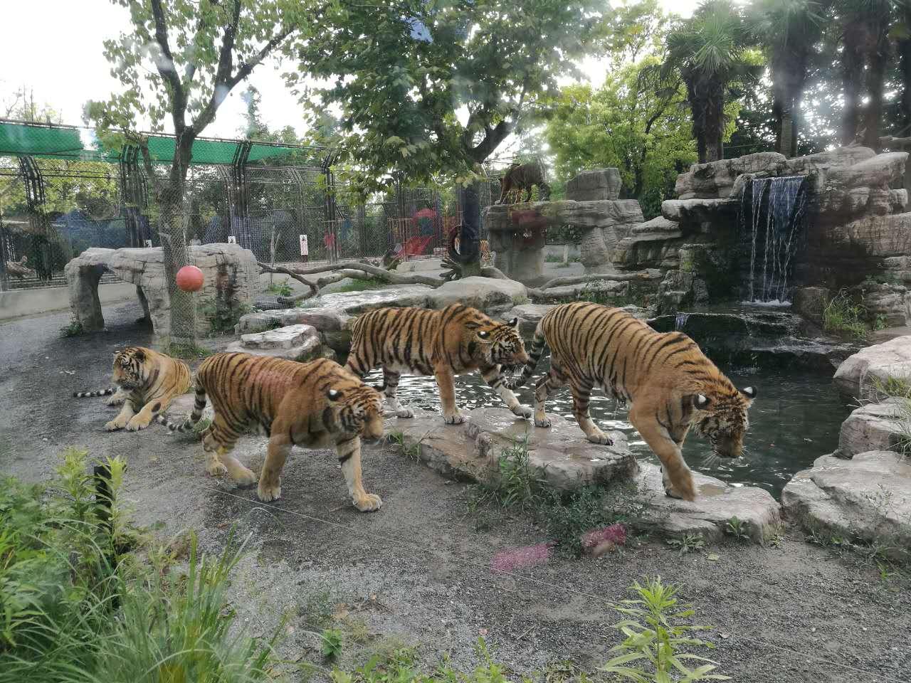 上海野生动物园   成人票 新用户专享【门票特卖】