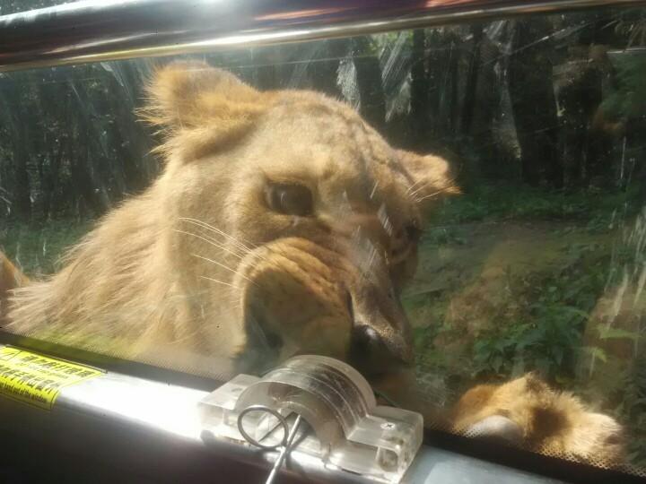 雅安碧峰峡野生动物园   野生动物园(含猛兽区观光车 动物表演)【提前