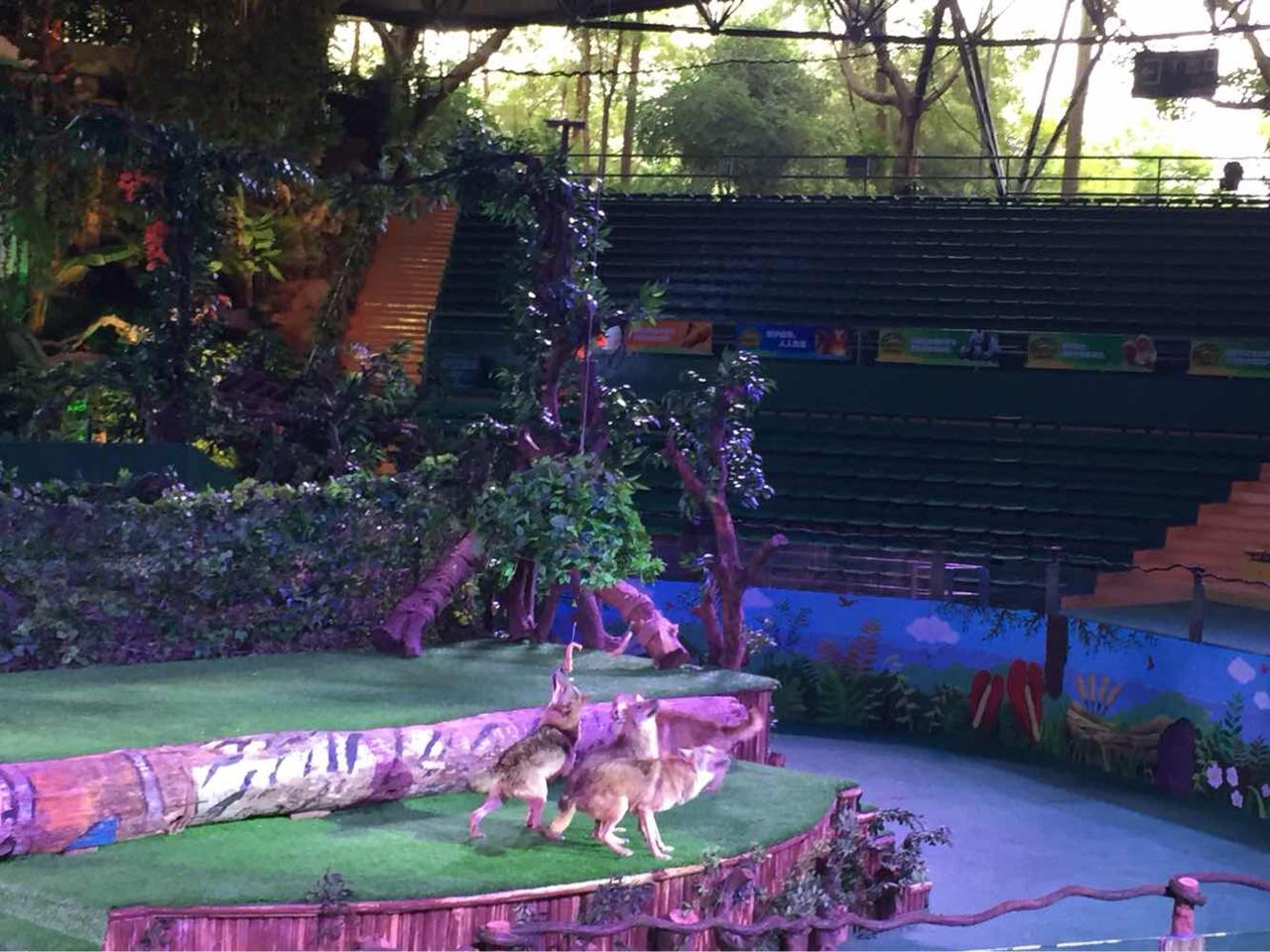 广州长隆野生动物园 平日成人票长隆野生动物园自驾车