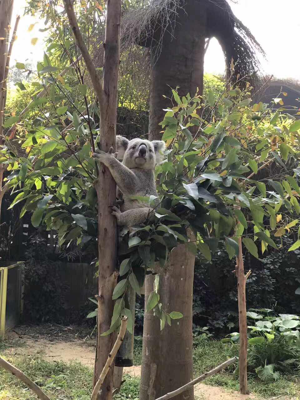 广州长隆野生动物园   平日成人票(12.30前出游 - 买大送小,赠流量)
