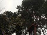 【醉美温泉季】住龙佑赤壁温泉度假区中心酒店1晚+泡赤壁龙佑温泉+酒店双人自助早餐