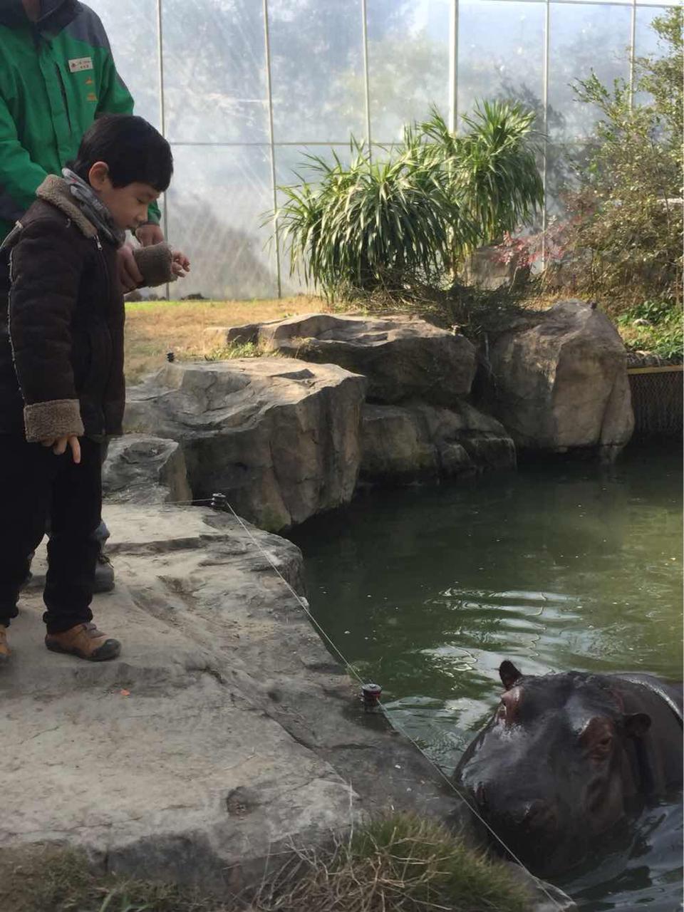 上海野生动物园   成人票【包含猛兽区大巴游览】