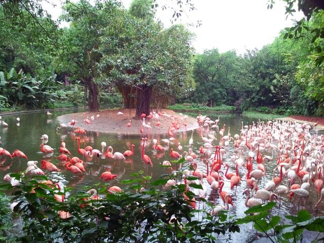 广州长隆野生动物园   平日成人票