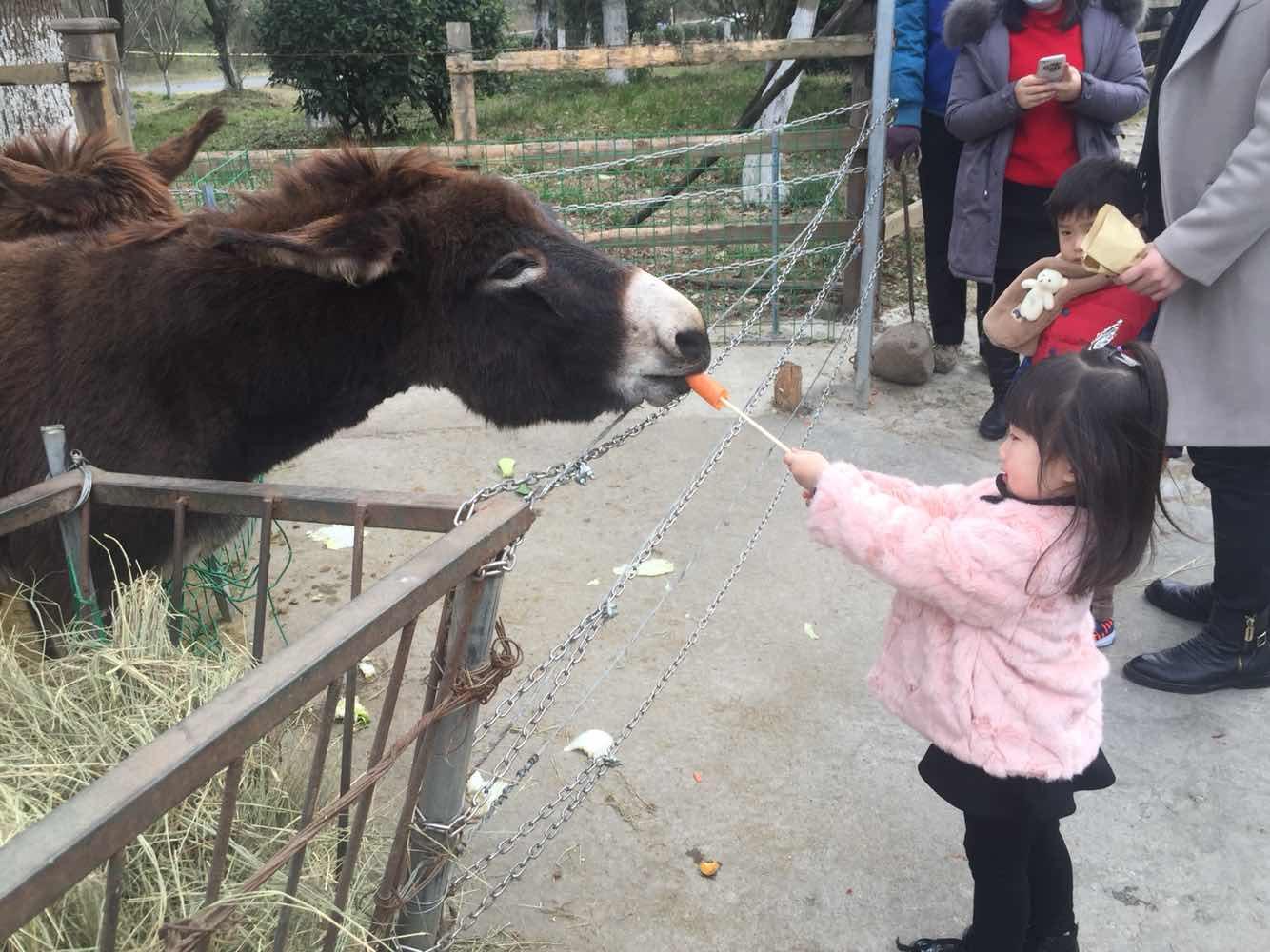常州淹城野生动物园   优惠票(儿童票,老人票)(赠马戏表演)