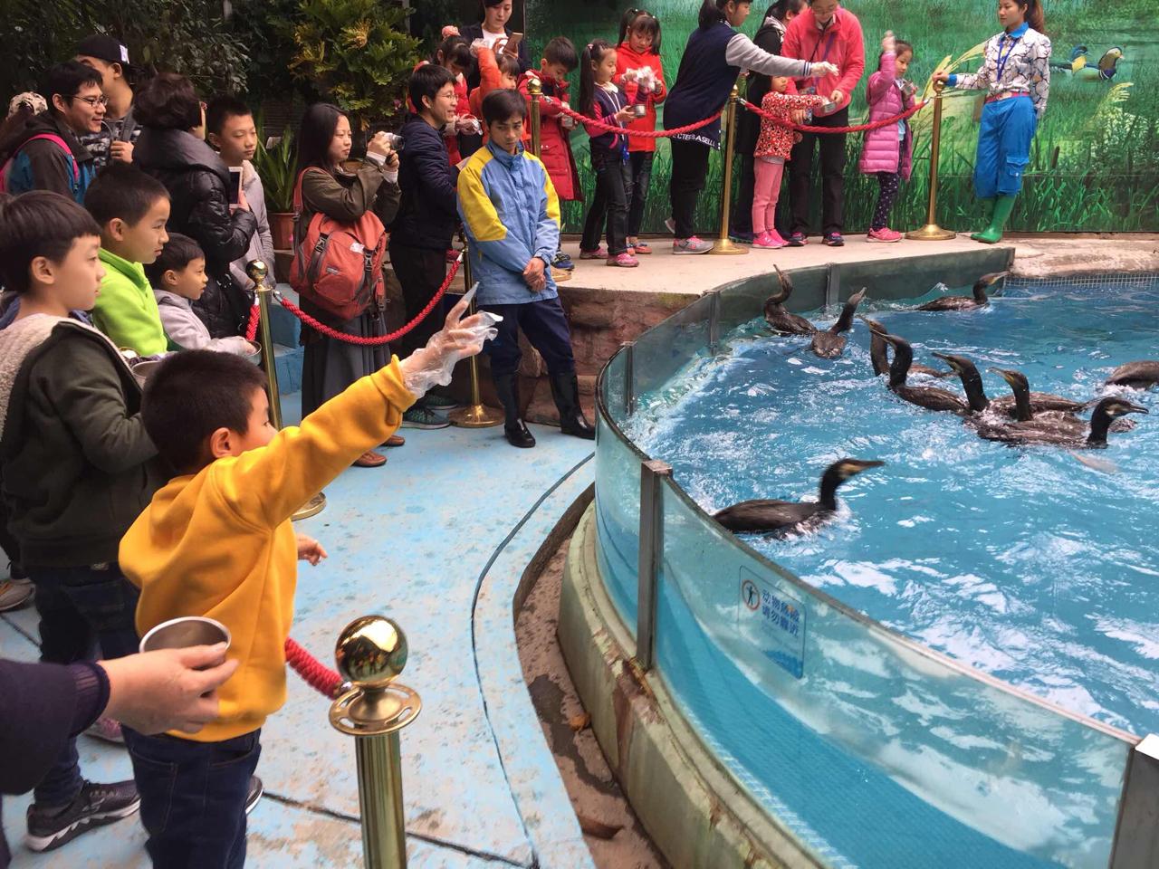 广州长隆飞鸟乐园   儿童票